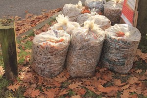 leaves in plastic trash bags