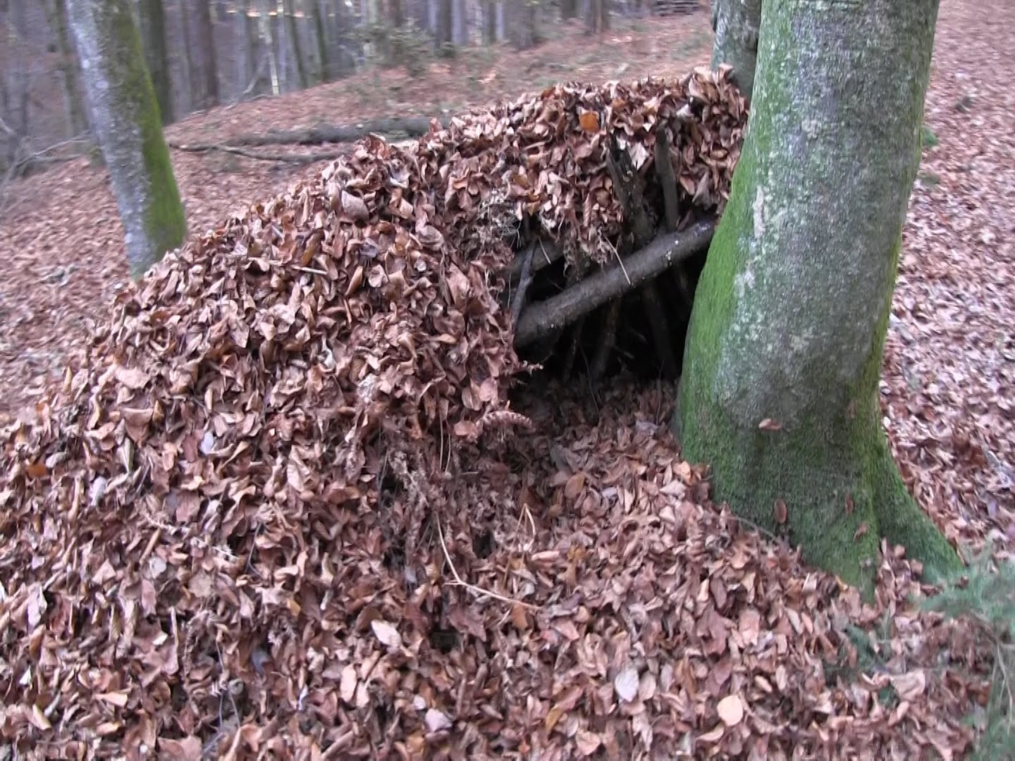 debris shelter in forest
