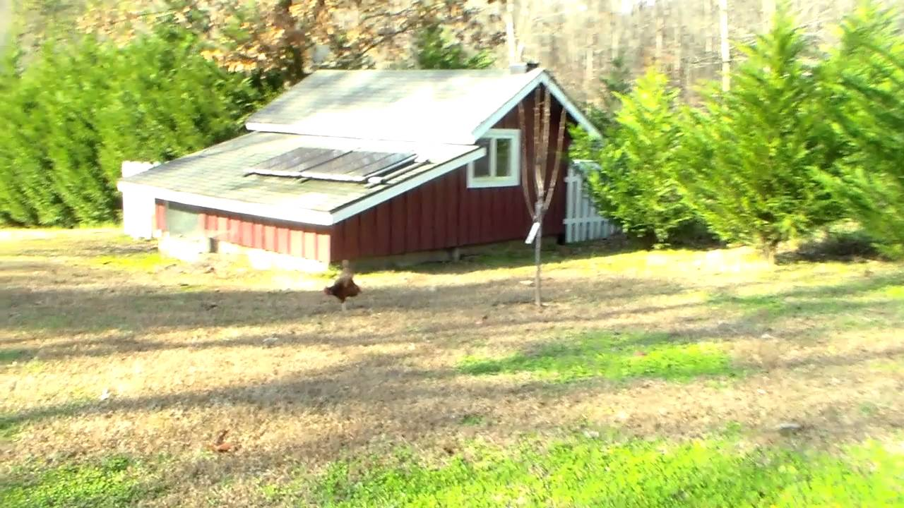 southern prepper's building
